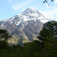 Araucaria forest in Chile by S. Reichard