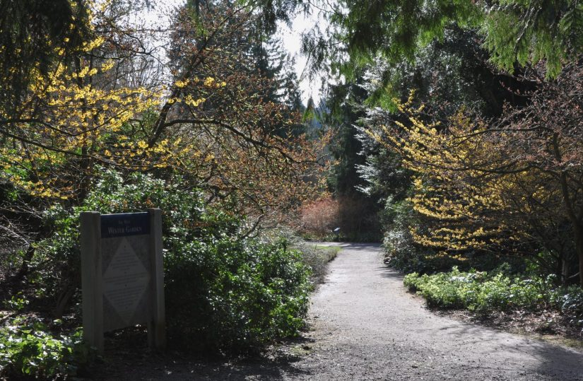 path leading to winter garden