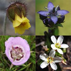 Rare plant collage