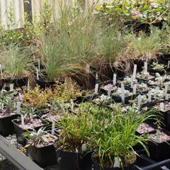 Hoophouse plants