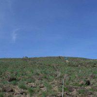 Astragalus sinuatus transect