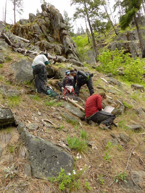 Students examine Hackelia venusta soils