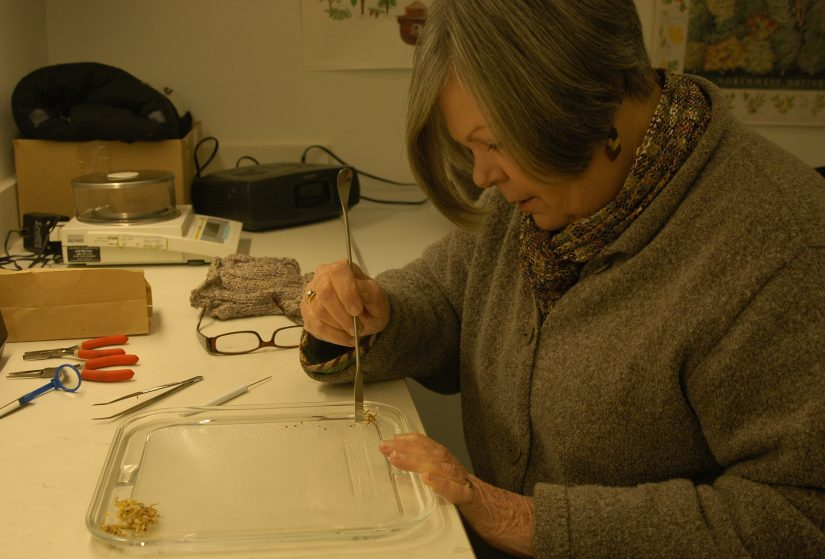 Cleaning Astragalus sinuatus seeds in the Miller Seed Vault