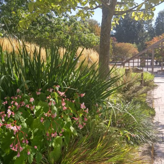 Soest Herbaceous Display Garden
