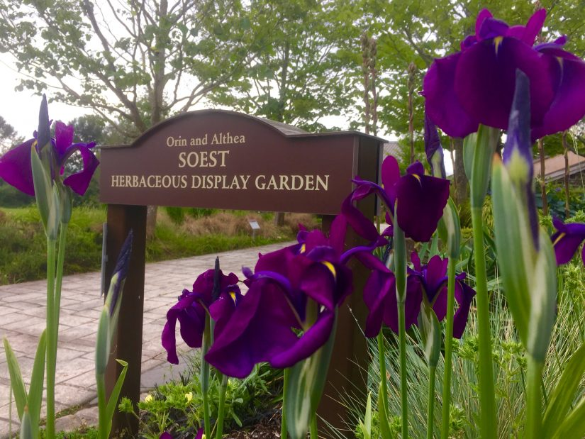 closeup-of-soest-garden-sign-with-irises-blooming-5-24-16 ER