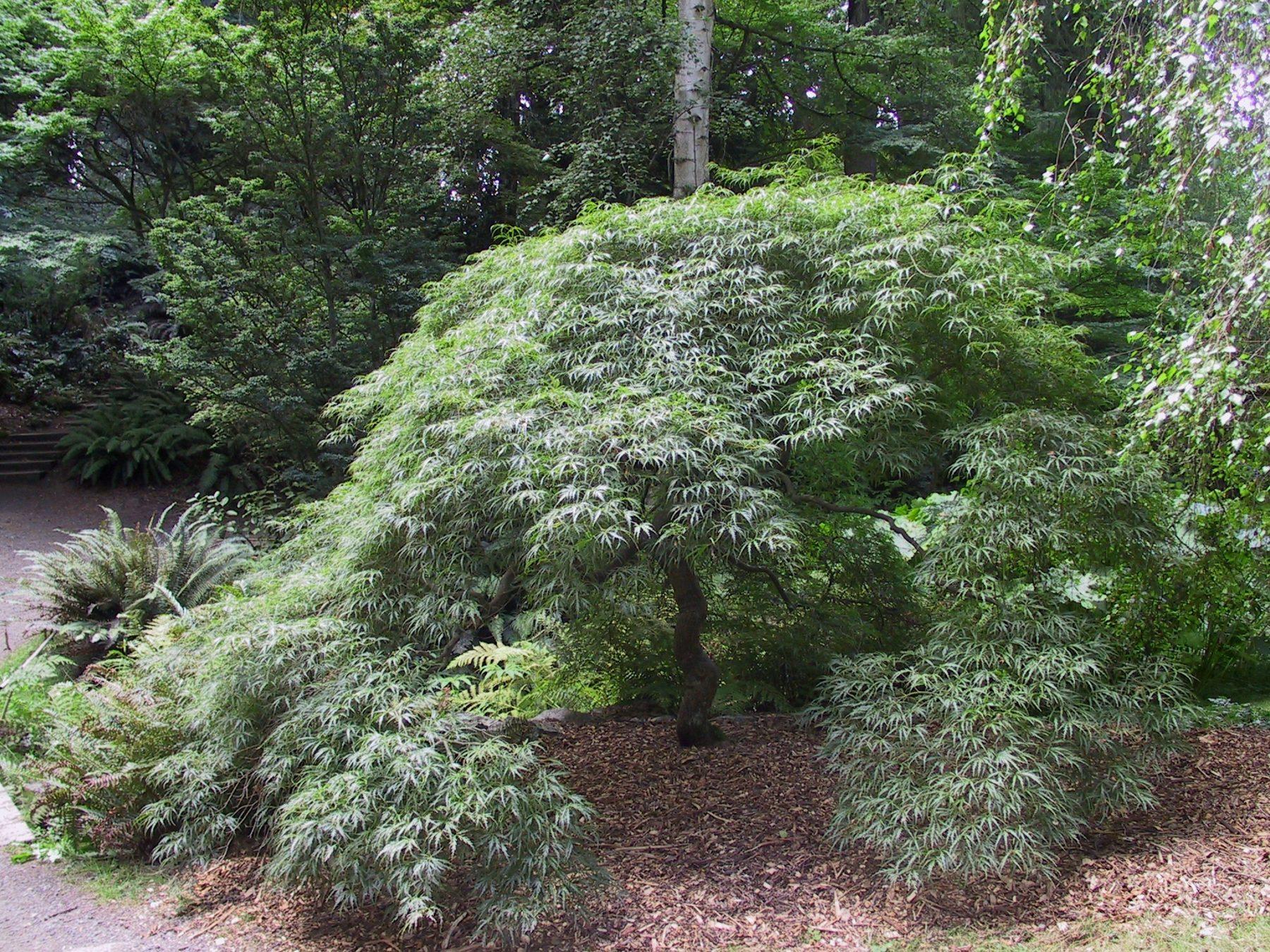 Core Collections University Of Washington Botanic Gardens