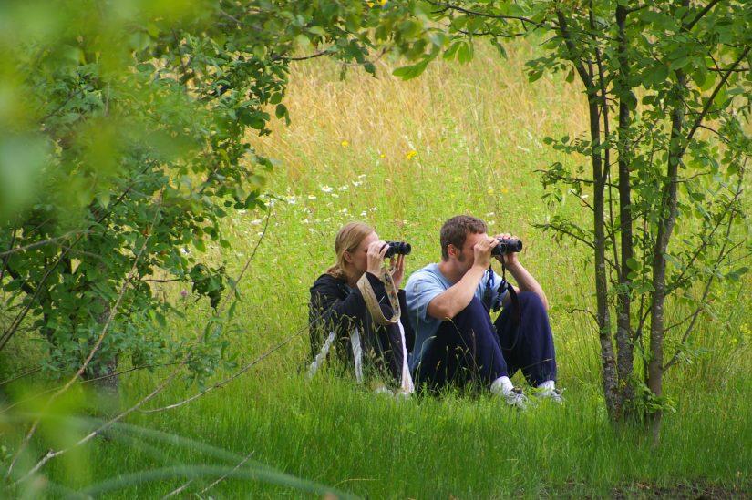 Birdwatching in UBNA
