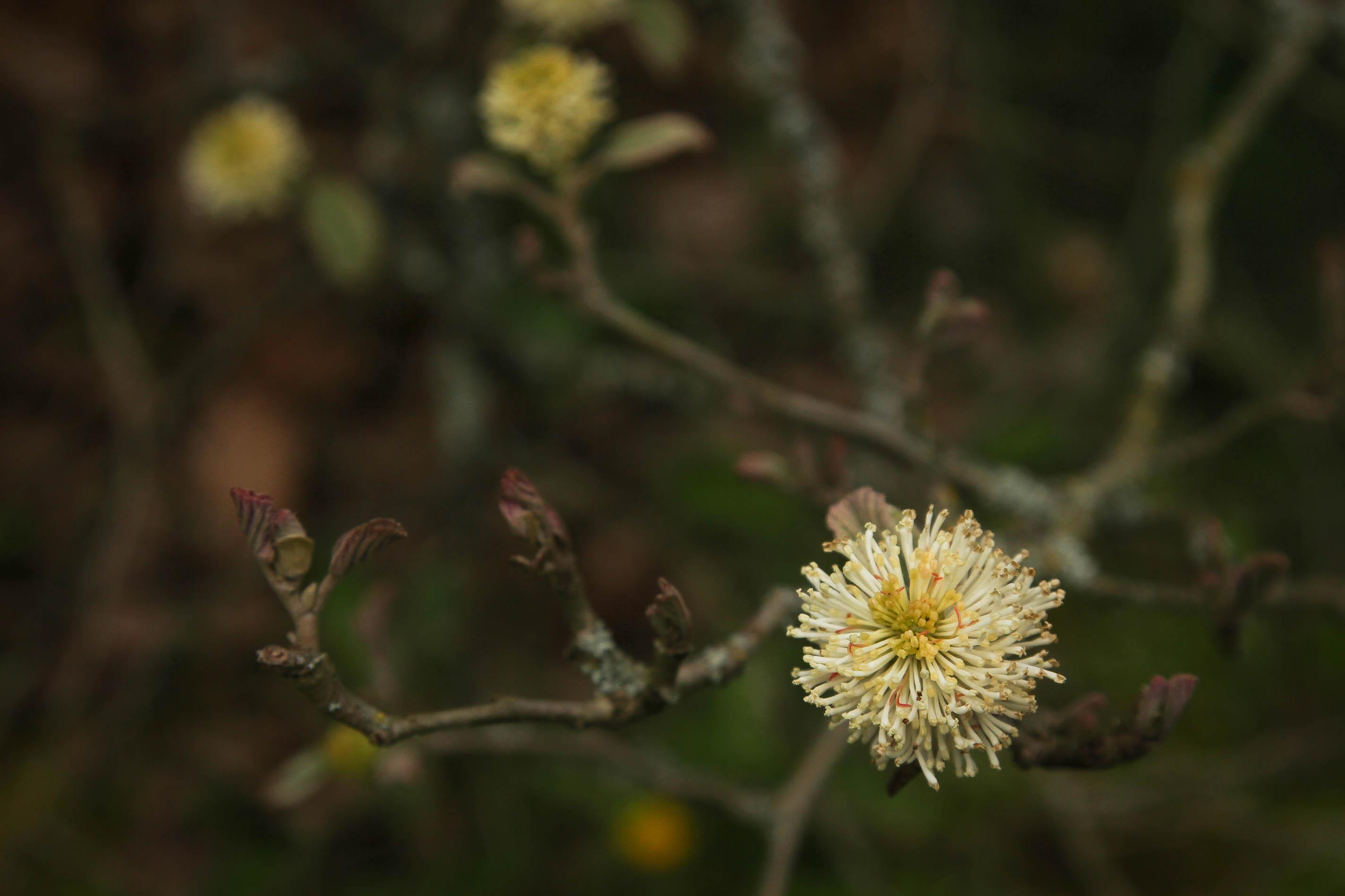 Core Collections | University of Washington Botanic Gardens