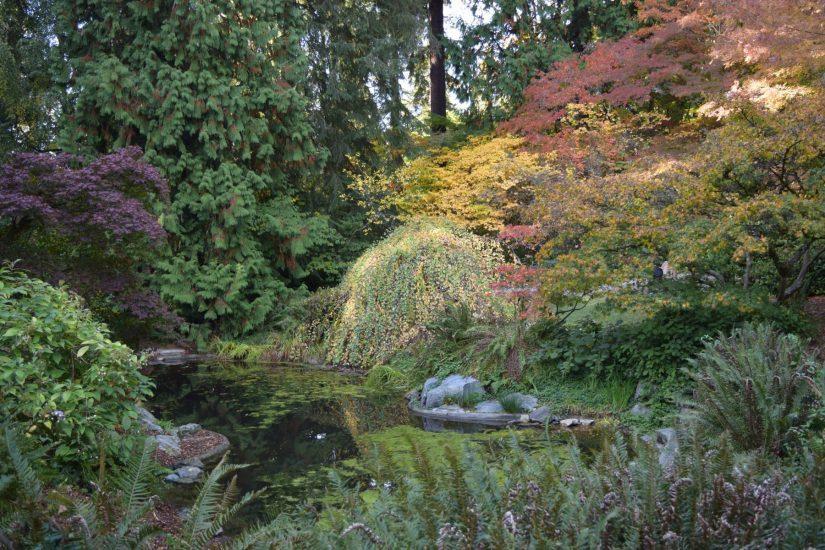 woodland-garden-upper-pond-in-fall-niall-dunne