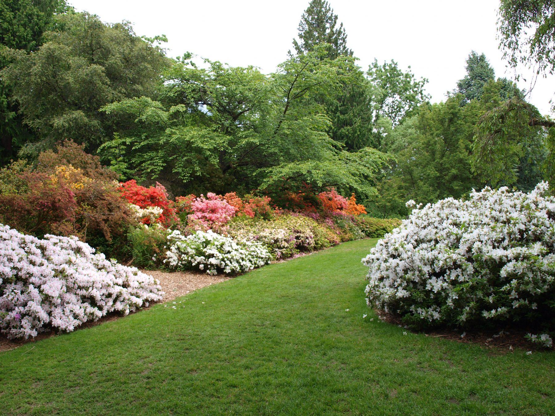 Azalea Way University Of Washington Botanic Gardens