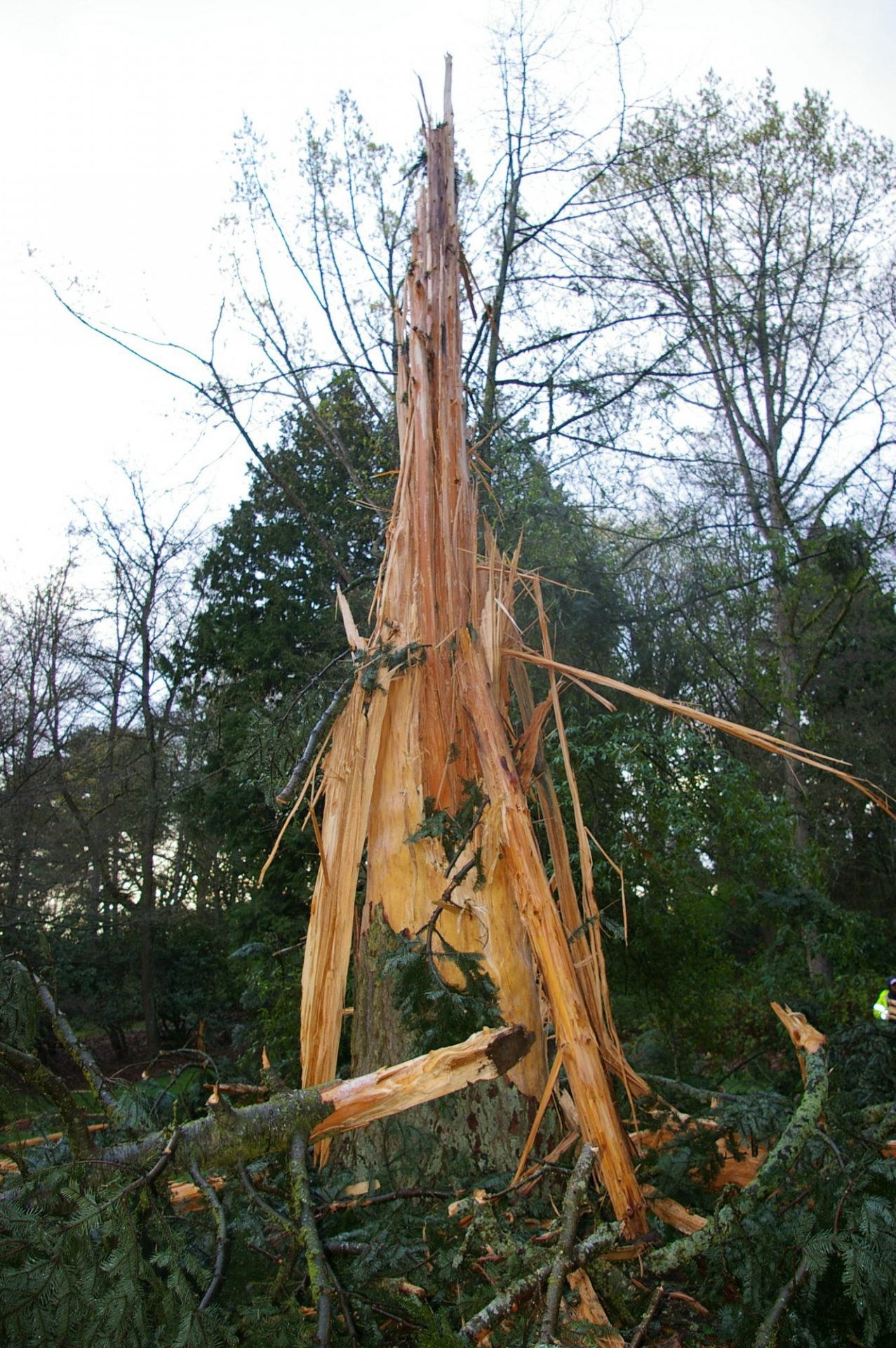 Exploding Trees Now Showing At Your Local Arboretum