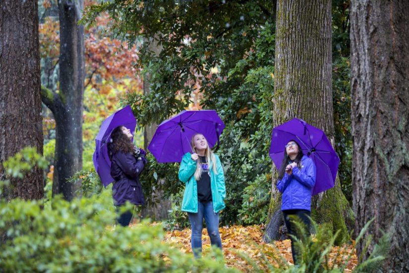 Washington Park Arboretum University Of Washington Botanic Gardens