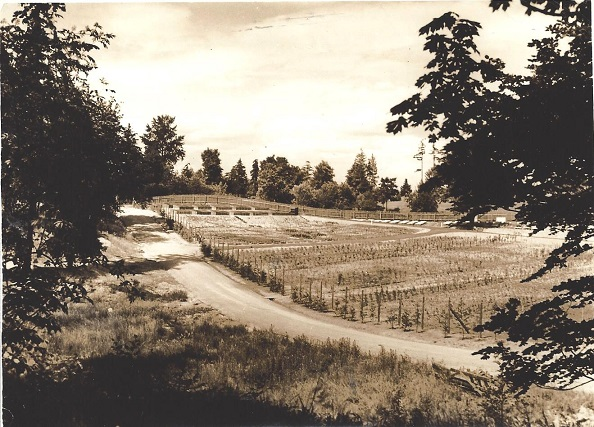 View of Section C, Nursery and Seedling beds