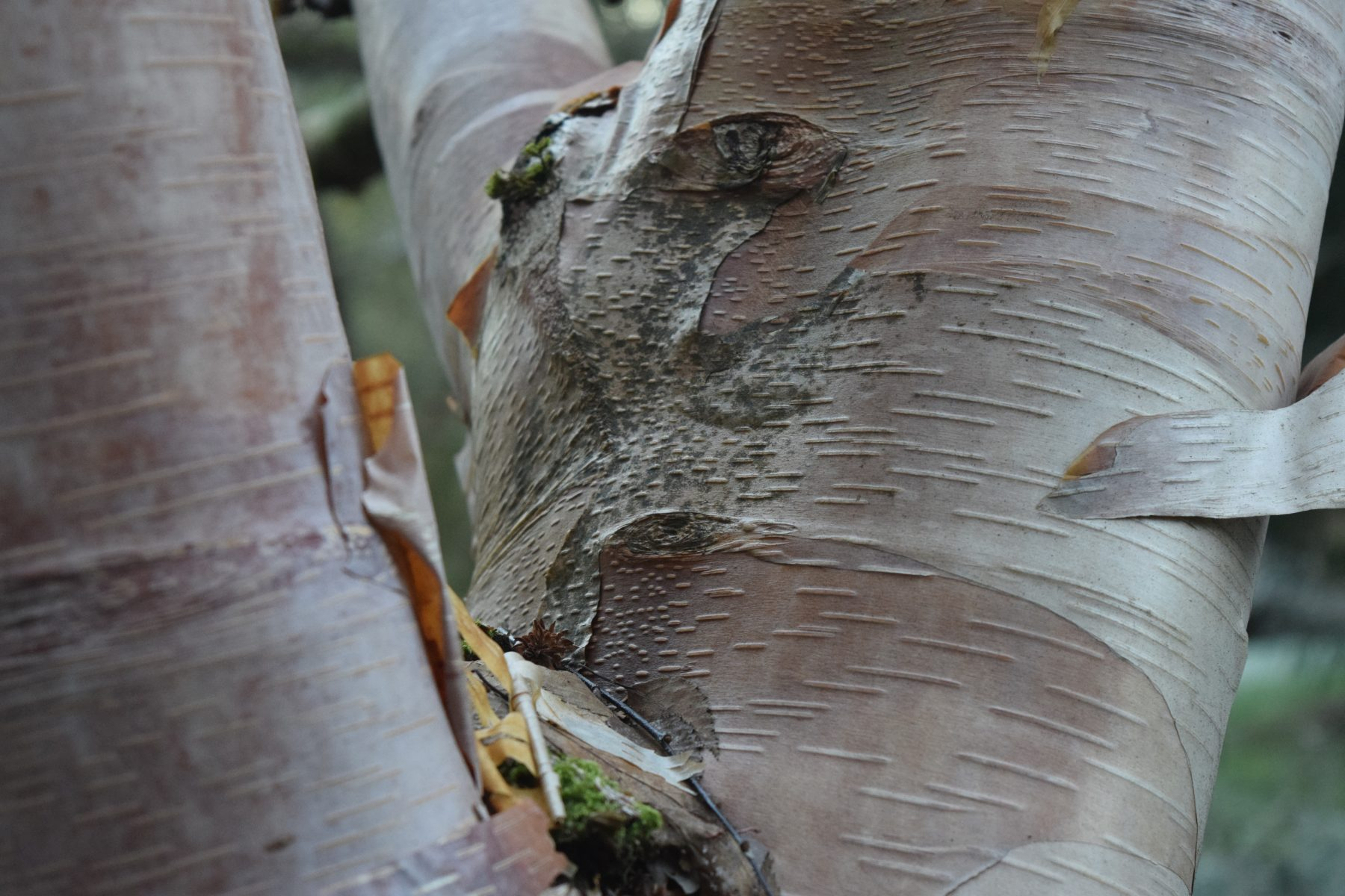 january 2016 plant profile a study on sticks in the witt winter