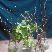 Selected cuttings from the Joseph Witt Winter Garden, February 13 - 26, 2017