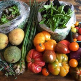 photo of sample produce
