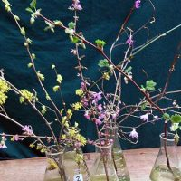 Selected cuttings from the Washington Park Arboretum , March 13 - 20, 2017