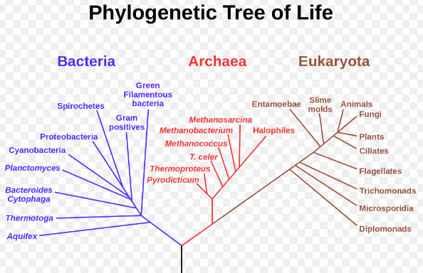 Phylogenetic Tree of Life from Wikimedia Commons