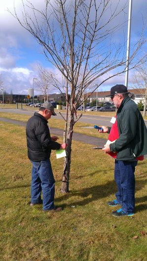 Measuring-Critical-Root-Zone-of-trees