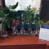 Selected cuttings from the Washington Park Arboretum, October 1 - 14, 2018