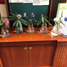 Selected cuttings from the Washington Park Arboretum, January 21, 2019 - February 3, 2019