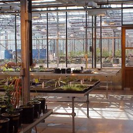 inside greenhouse view of benches with plants