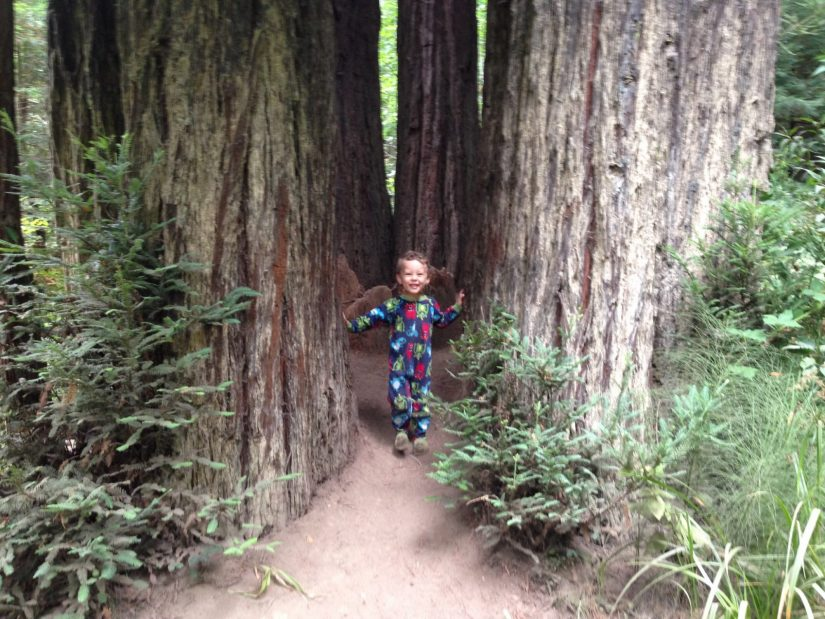 a family ring of Sequoia sempervirens with boy standing in the middle