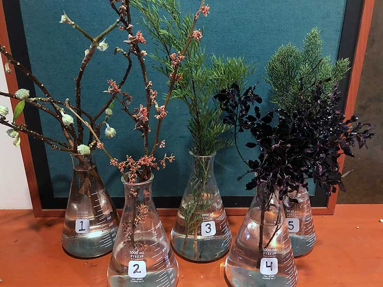 Selected cuttings from the Washington Park Arboretum, December 9 - 22, 2019