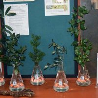 Selected cuttings from the Washington Park Arboretum, December 23, 2019 - January 5, 2020