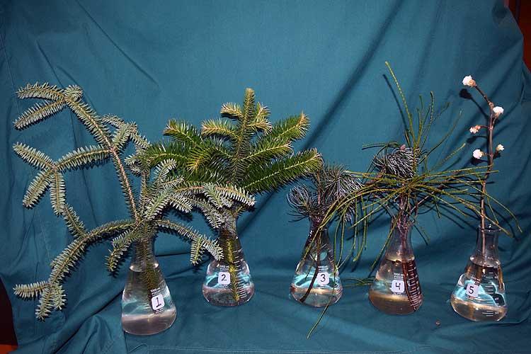 Selected cuttings from the Washington Park Arboretum, January 21, 2020 - February 2, 2020