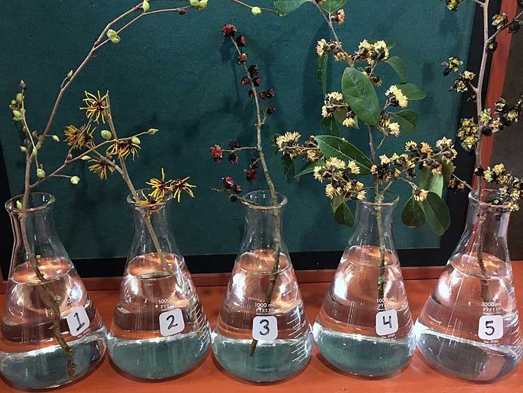 Selected cuttings from the Washington Park Arboretum, February 3 - 16, 2020