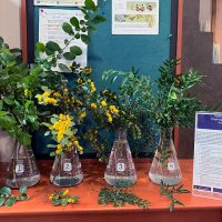 Selected cuttings from the Washington Park Arboretum, March 3 - 16, 2020