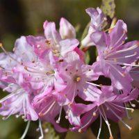 close up of flower cluster