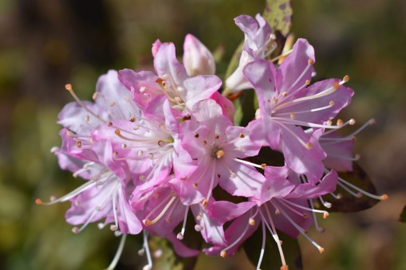 close up of flower cluster