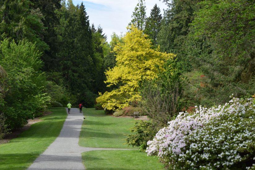 Azalea Way with large golden oak on right side