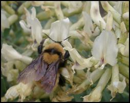 A pollinator visiting a white flower