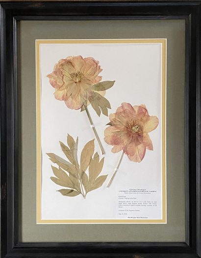 two pink flowers pressed on paper in a frame