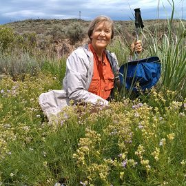 Woman sitting in a field of lavendar flowers and sagebrush