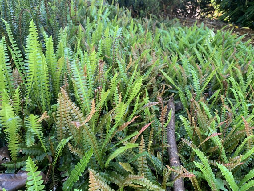 view of many ferns