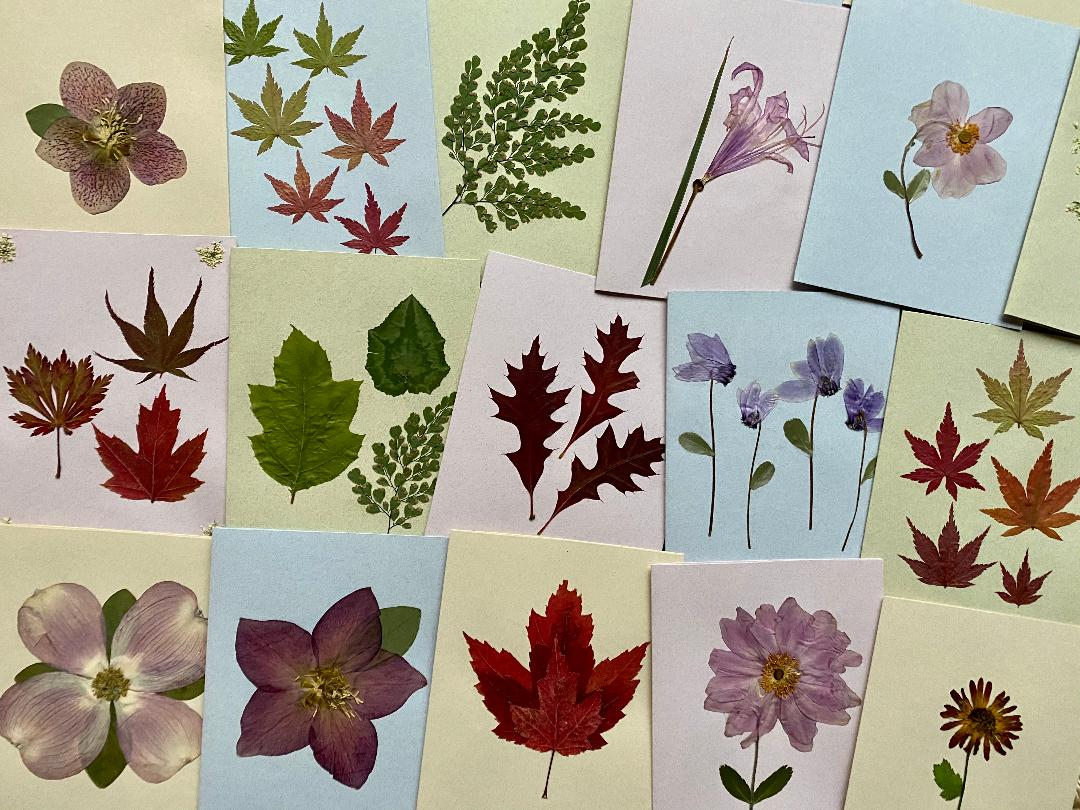 cards of various pressed leaves and flowers on pastel colored background