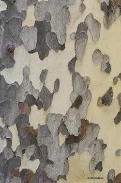AL Dodson photo of bark