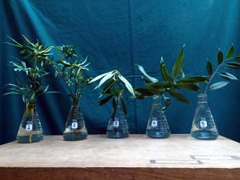 Selected cuttings from the Washington Park Arboretum (November 2 - 15, 2015)