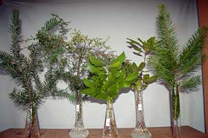 Selected cuttings from the Washington Park Arboretum (January 21 - February 3, 2013)