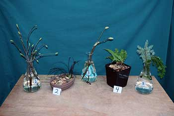 Selected cuttings from the Washington Park Arboretum (January 25 - February 7, 2016)
